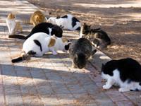 Animal Hoarding – das unendliche Leid der Tiere