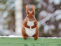 Winterwunderland - Wildtiere im Winter