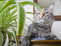 Katzenpflanzen - Grünzeug für gesunde Naschkatzen