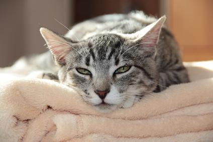 Wenn Katzen schnurren, vibriert die Umgebung