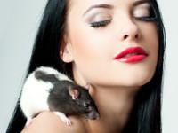 Kosmetika: Tierversuche in Deutschland