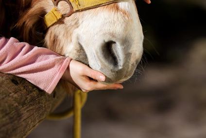 Pferd im Herbst füttern