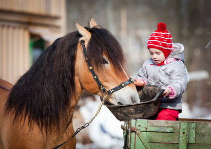 Pferdehaltung im Winter