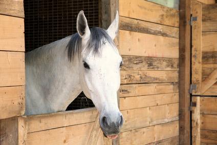 Übergewicht bei Pferden: falsche Haltungsbedingungen sind schuld!