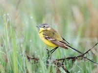 Der Klimawandel und die Vogelwelt