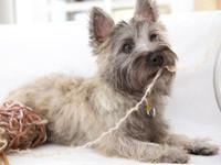 Haftpflichtversicherung für Tierhalter