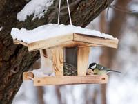 Wie Gartenvögel den Winter gut überstehen