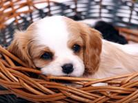 Hundekauf – Züchter oder Tierheim?