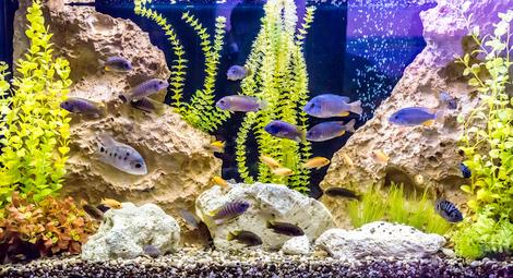 aquarium haltung pflege und einrichtung. Black Bedroom Furniture Sets. Home Design Ideas