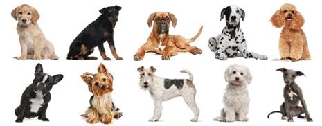 Hunde Und Welpen Erfahre Alles 252 Ber Hunde