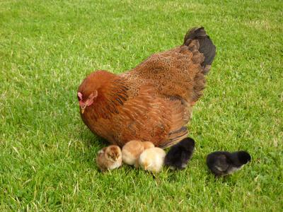 vogelgrippe symptome hund