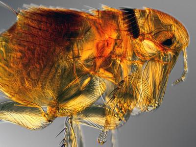 abgestorbene milben pferd bilder